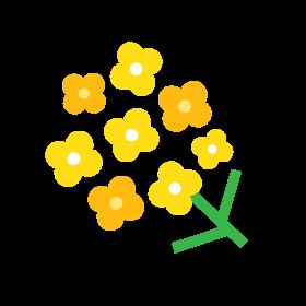 第12回 菜の花 アイコン